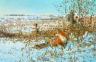 Michael Sieve December Snowfall - Red Fox