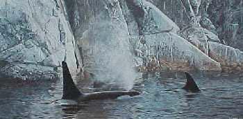 Ron Parker Deep Water Orcas