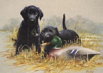 James Killen Double Trouble - Black Labs