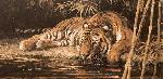 Bob Kuhn Drinking Tiger