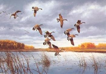 David Maass Dusk In the Bay Canada Geese Artist