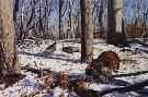 David Maass Early Spring - Wild Turkeys