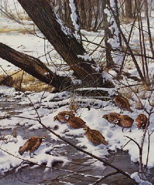 David Maass Early Winter Morning Bobwhite