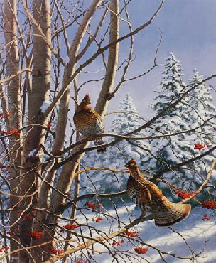 David Maass Early Winter Morning Ruffed Grouse Artist