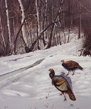 David Maass Early Winter Morning Turkeys