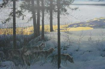 Robert Bateman Edge Of Night Timber Wolves