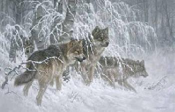Larry Fanning Edge of Winter - Gray Wolves Artist