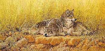 Larry Fanning End Of Summer Gray Wolves