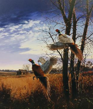 David Maass Evening Flight - Pheasants