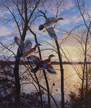 David Maass Evening Flight - Wood Ducks