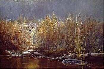 Paco Young Evening Glow Coyote