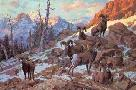 Harry Curieux Adamson Evening Solitude Bighorns