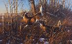 Michael Sieve Evening Stand Whitetail Deer