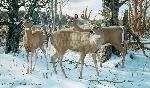 Ron Van Gilder Ever Watchful - Whitetail Deer