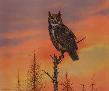 Owen Gromme Eyes of the Night - Great Horned Owl Artist