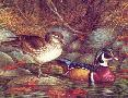 John Wilson Fall Plumage - Wood Ducks