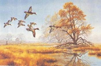 David Maass Farm Pond Green Winged Teal Artist