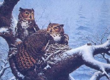 Lee Kromschroeder February Nest - Great Horned Owl