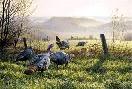 Jim Kasper Fenceline Crossing - Wild Turkeys