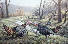 Jim Kasper Feuding Time - Wild Turkeys
