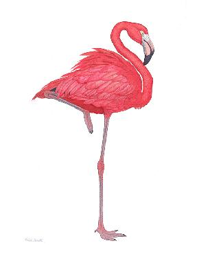 Flick Ford Flamingo Giclee on Canvas