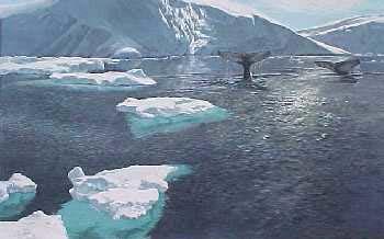 John Seerey-Lester Fluke Sighting Humpback Whales