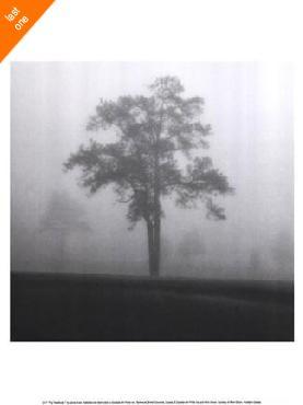 Jamie Cook Fog Tree Study I   LAST ONES IN INVENTORY!!
