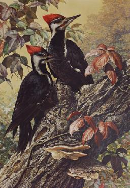 Carl Brenders Forest Carpenter - Pileated Woodpeckers
