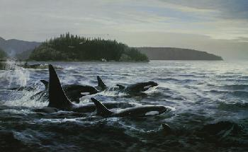 Persis Clayton Weirs Free Spirits - Orcas