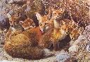 Carl Brenders Full House Fox Family