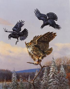 Owen Gromme Getting Even - Great Horned Owl and Crows