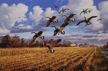 David Maass Golden Bounty - Canada Geese Artist