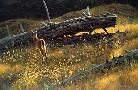 Robert Bateman Golden Light Black Tailed Fawn