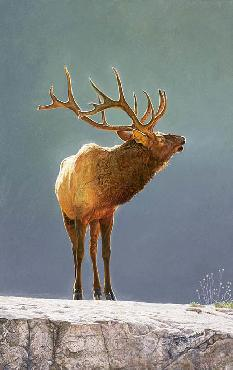Brent Townsend Golden Light - Elk Giclee on Paper