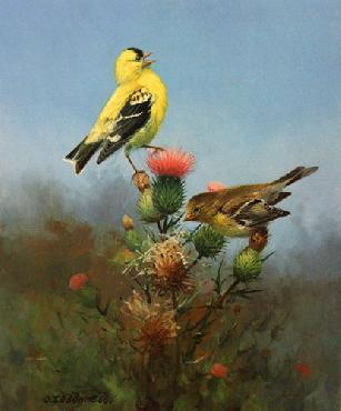 Owen Gromme Goldfinch