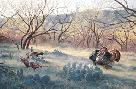 Jim Kasper Grande Morning - Rio Grande Wild Turkeys