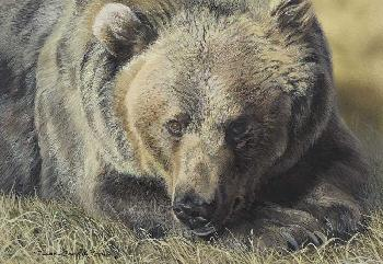 Susan Yoder Great Bear Giclee on Museum Paper