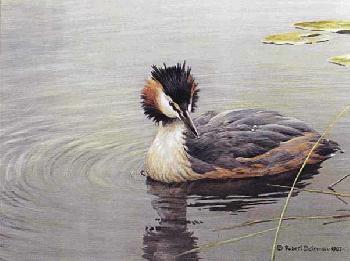 Robert Bateman Great Crested Grebe