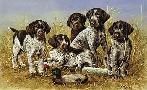 James Killen Great Hunting Puppies - Drahthaar