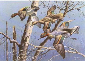 David Maass Green Winged Teal 1982 Arkansas Duck Stamp Print