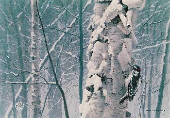 Robert Bateman Hairy Woodpecker on Birch