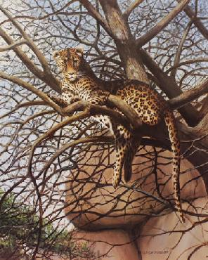 Owen Gromme Hanging Loose - Leopard