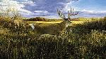 Ron Van Gilder Hanson Buck - Record Whitetail Deer