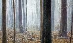Robert Bateman Hardwood Forest - White-Tail Deer
