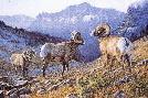 Jim Kasper Headstrong - Bighorn Sheep