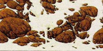 Bev Doolittle Hide and Seek Cameo F SIGNED AND NUMBERED