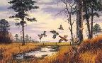 David Maass Homestead Covey - Bobwhite