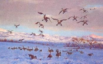 Owen Gromme Hunting in the West - Canada Geese Artist