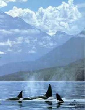 Ron Parker Inside Passage Orcas