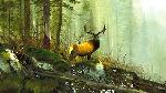 Michael Coleman In the Big Horns - Elk